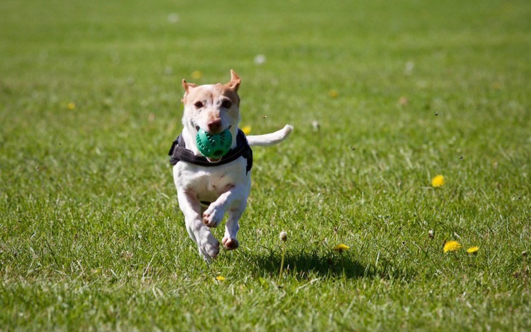 Venerdì 7 febbraio: Consigli per educare il tuo cane